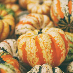 several miniature pumpkins